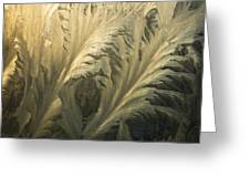 Frost Crystal Patterns On Glass, Ross Greeting Card