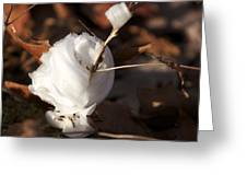 Frost Flower 3 Greeting Card