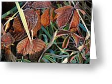 Frost On Leaves No. 2 Greeting Card