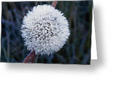Frost On Mature Dandelion Blossom Greeting Card