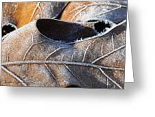 Frost On Oak Leaf Greeting Card