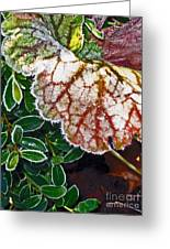 Frosted Edges Greeting Card