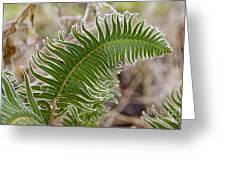 Frosted Fern Greeting Card