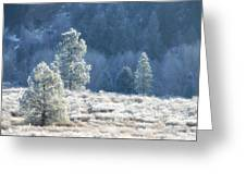 Frosted Morning Greeting Card
