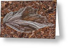 Frosted Raspberry Leaf Greeting Card