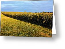 Frosted Soybeans Greeting Card