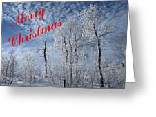 Frosted Trees Christmas Greeting Card
