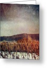 Frosty Field In Late Winter Afternoon Greeting Card