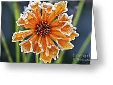 Frosty Flower Greeting Card by Elena Elisseeva