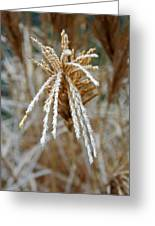 Frosty Fountain Grass Greeting Card