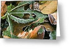 Frosty Leaves II Greeting Card
