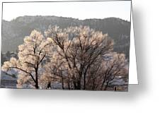 Frosty Tree Greeting Card