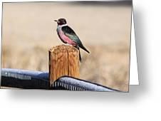 Frosty Woodpecker Greeting Card