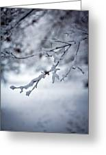 Frozen Path Greeting Card
