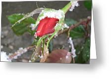 Frozen Rosebud Greeting Card