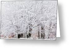 Frozen Trees Greeting Card