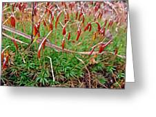 Fruiting Moss - Red And Green Tableau Greeting Card