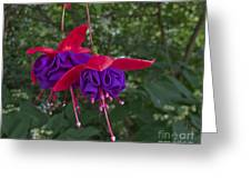 Fuchsia Flower Greeting Card