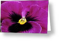 Fuchsia Pansy Greeting Card