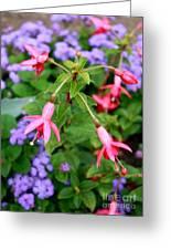 Fuchsia Standout Greeting Card