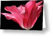 Full Bloom Pink Tulip Flower Greeting Card