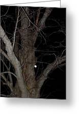 Full Moon Beyond The Old Tree Greeting Card
