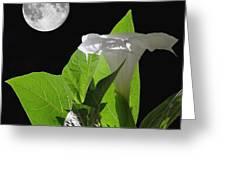 Full Moon Flower Greeting Card