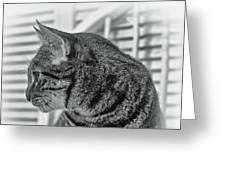 Full Profile Of The Cat - Black-and-white Greeting Card