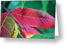 Full Spectrum Sumac Greeting Card