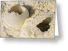 Fumarole Deposits In The Dallol Greeting Card