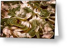 Fungus Swirl Greeting Card by Michael Putnam
