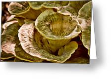 Fungus Tunnel Greeting Card by Michael Putnam