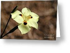 Funny Face Flower Greeting Card