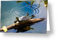 Funny Turtle Catching Some Rays Greeting Card