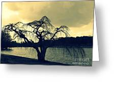Furman Lake Tree Greeting Card