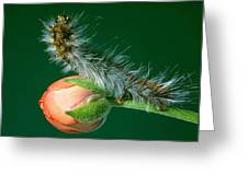 Furry Caterpillar Greeting Card