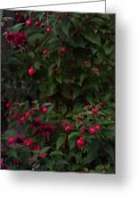 Fuschia Tree Greeting Card