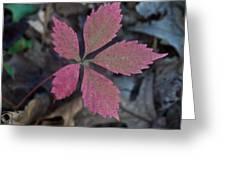 Fushia Leaf Greeting Card