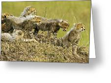 Fuzzy Babies Greeting Card
