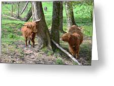 Fuzzy Cows Greeting Card by Bob Jackson