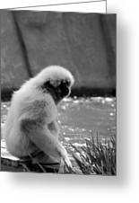 Fuzzy Monkey 002 Greeting Card