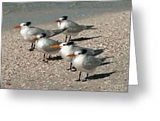 Gaggle Of Gulls Greeting Card