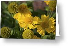 Gaillarde Mesa Yellow Greeting Card