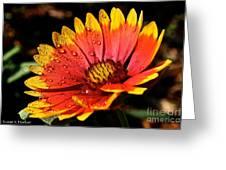 Gaillardia Flower Greeting Card