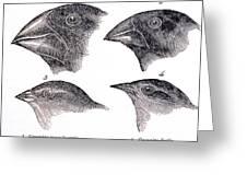 Galapagos Finches Greeting Card
