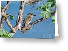 Galapagos Flycatcher Greeting Card