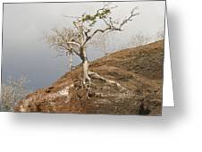 Galapagos Tree Greeting Card