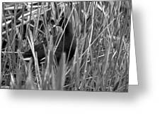 Gallinule In The Grass Greeting Card