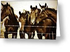 Galloping Brothers  Greeting Card