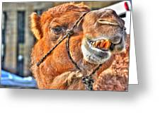 Gangsta Grillin This Camels Chillin Greeting Card